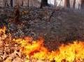 Ambiente: Incendi: sono 1.850 i roghi divampati in Italia, -58% - Lo dico i dati, ancora provvisori, del Corpo forestale dello Stato, relativi al periodo tra il 1� gennaio e il 14 agosto 2013