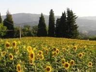 varie: Consumo di suolo, le modifiche dell�Anci alla proposta di legge -   Evitare l�effetto �ghigliottina� che rischia di mettere in gravissima difficolta' i bilanci di tutti i Comuni