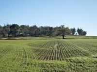 varie: Decreto 'Terrevive', 5.500 ettari di terreni agricoli pubblici in vendita  -   Firmato dal Mipaaf, favorisce i giovani under 40 per incentivare il ricambio generazionale