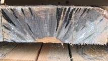 Perche' i funghi degradano il legno