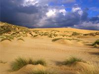 News: Nell�ultimo secolo scomparse l�80% delle Dune - Sono uno degli ecosistemi pi� delicati in natura e costituiscono  una barriera anti-erosione eccezionale, eppure risultano tra aree  meno protette in assoluto