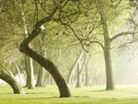 verde e giardini: Una passeggiata tra i dieci parchi piu� belli d�italia 2010 -   Eletti i dieci finalisti del concorso Il Parco Pi� Bello d�Italia, tra i quali verr� eletto il vincitore entro l�estate