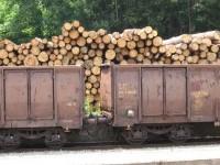 Ambiente: dal 2013 stop al legname illegale