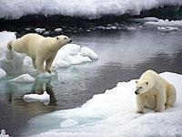 News: Clima: preoccupazione dall'Artico  - Il declino dell'Artico procede sempre pi� in fretta. Per la prima volta si sono aperti il passaggio a Nord-ovest sopra l'America settentrionale, sia quello a nord-est sopra la Russia. Il Wwf, nel fornire un quadro aggiornato della situazione nella regione, lancia oggi un nuovo allarme ghiacci.