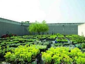 Il giardino nel mondo contemporaneo: un ciclo di incontri a Treviso